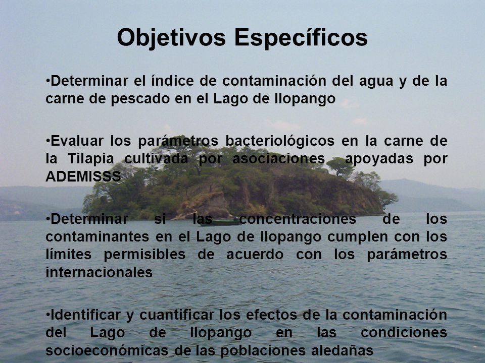 Objetivos Específicos Determinar el índice de contaminación del agua y de la carne de pescado en el Lago de Ilopango Evaluar los parámetros bacteriológicos en la carne de la Tilapia cultivada por asociaciones apoyadas por ADEMISSS Determinar si las concentraciones de los contaminantes en el Lago de Ilopango cumplen con los límites permisibles de acuerdo con los parámetros internacionales Identificar y cuantificar los efectos de la contaminación del Lago de Ilopango en las condiciones socioeconómicas de las poblaciones aledañas