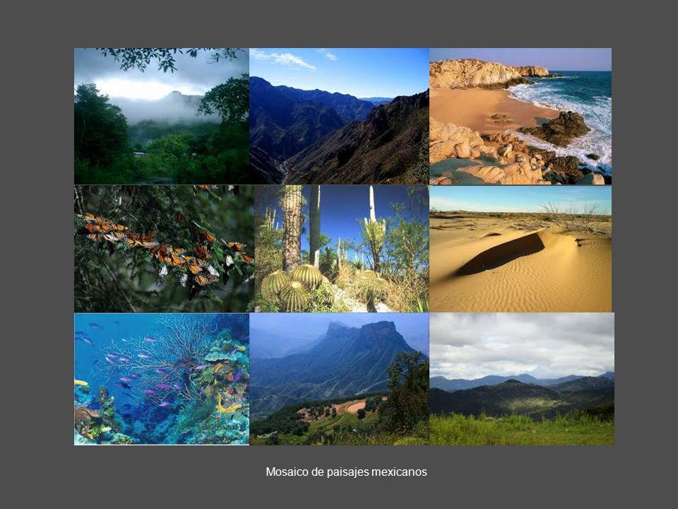 Mosaico de paisajes mexicanos