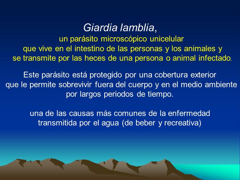 Giardia lamblia, un parásito microscópico unicelular que vive en el intestino de las personas y los animales y se transmite por las heces de una persona o animal infectado.