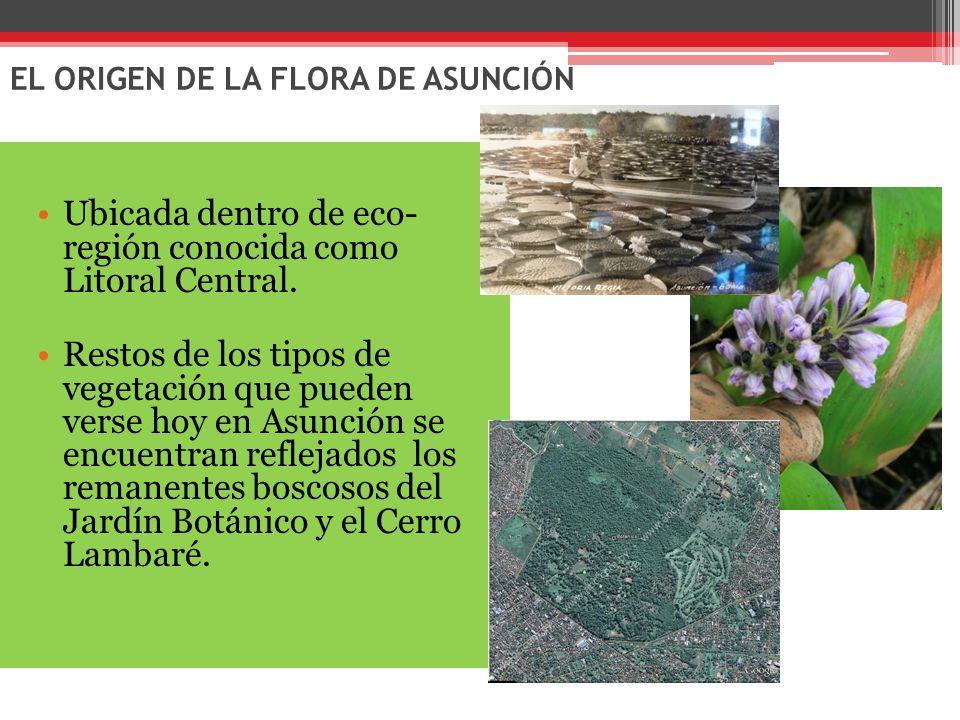 EL ORIGEN DE LA FLORA DE ASUNCIÓN Ubicada dentro de eco- región conocida como Litoral Central.