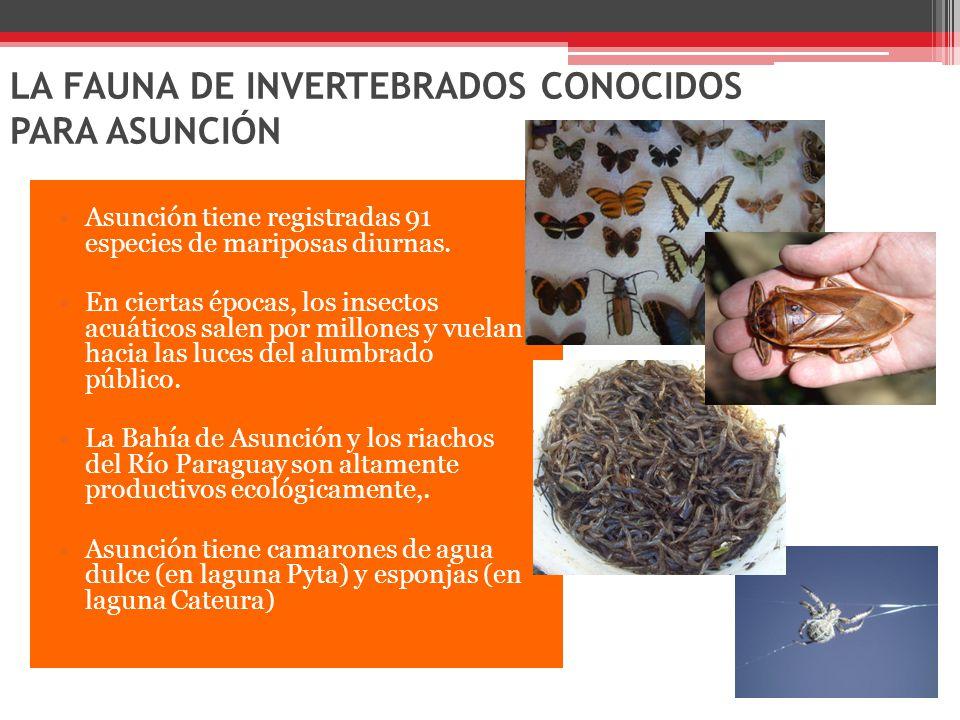 LA FAUNA DE INVERTEBRADOS CONOCIDOS PARA ASUNCIÓN Asunción tiene registradas 91 especies de mariposas diurnas.