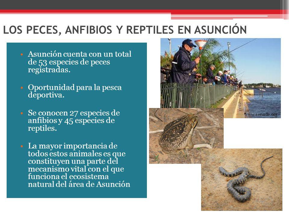 LOS PECES, ANFIBIOS Y REPTILES EN ASUNCIÓN Asunción cuenta con un total de 53 especies de peces registradas.