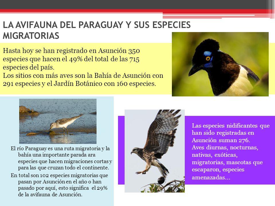 LA AVIFAUNA DEL PARAGUAY Y SUS ESPECIES MIGRATORIAS El río Paraguay es una ruta migratoria y la bahía una importante parada ara especies que hacen migraciones cortas y para las que cruzan todo el continente.