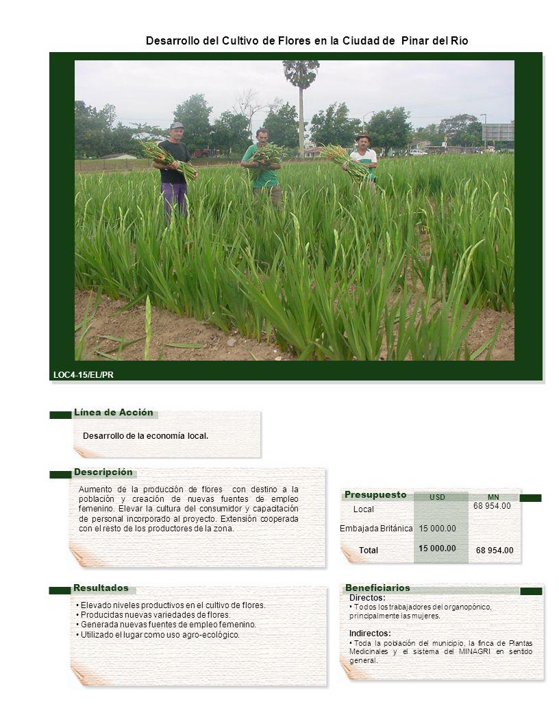 Desarrollo de la economía local.