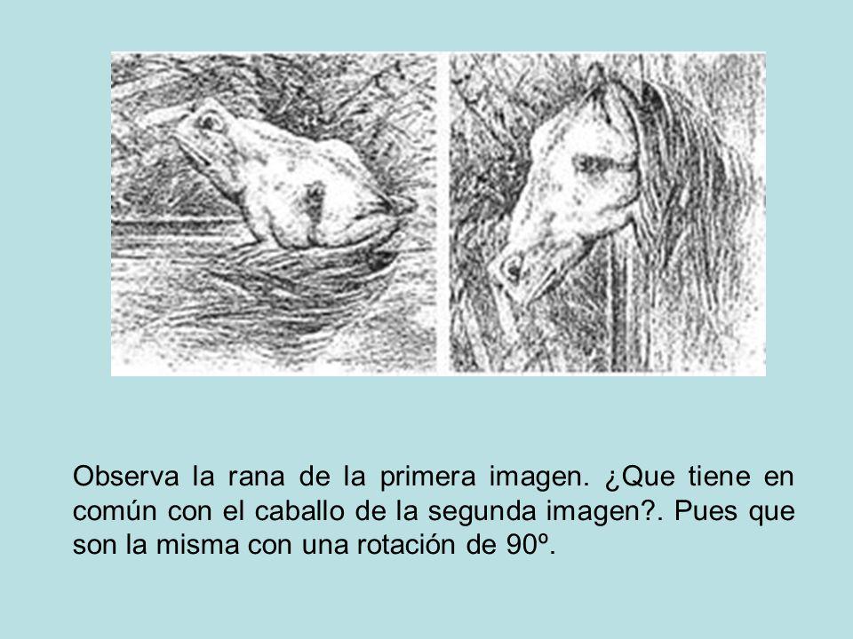 Observa la rana de la primera imagen. ¿Que tiene en común con el caballo de la segunda imagen?. Pues que son la misma con una rotación de 90º.
