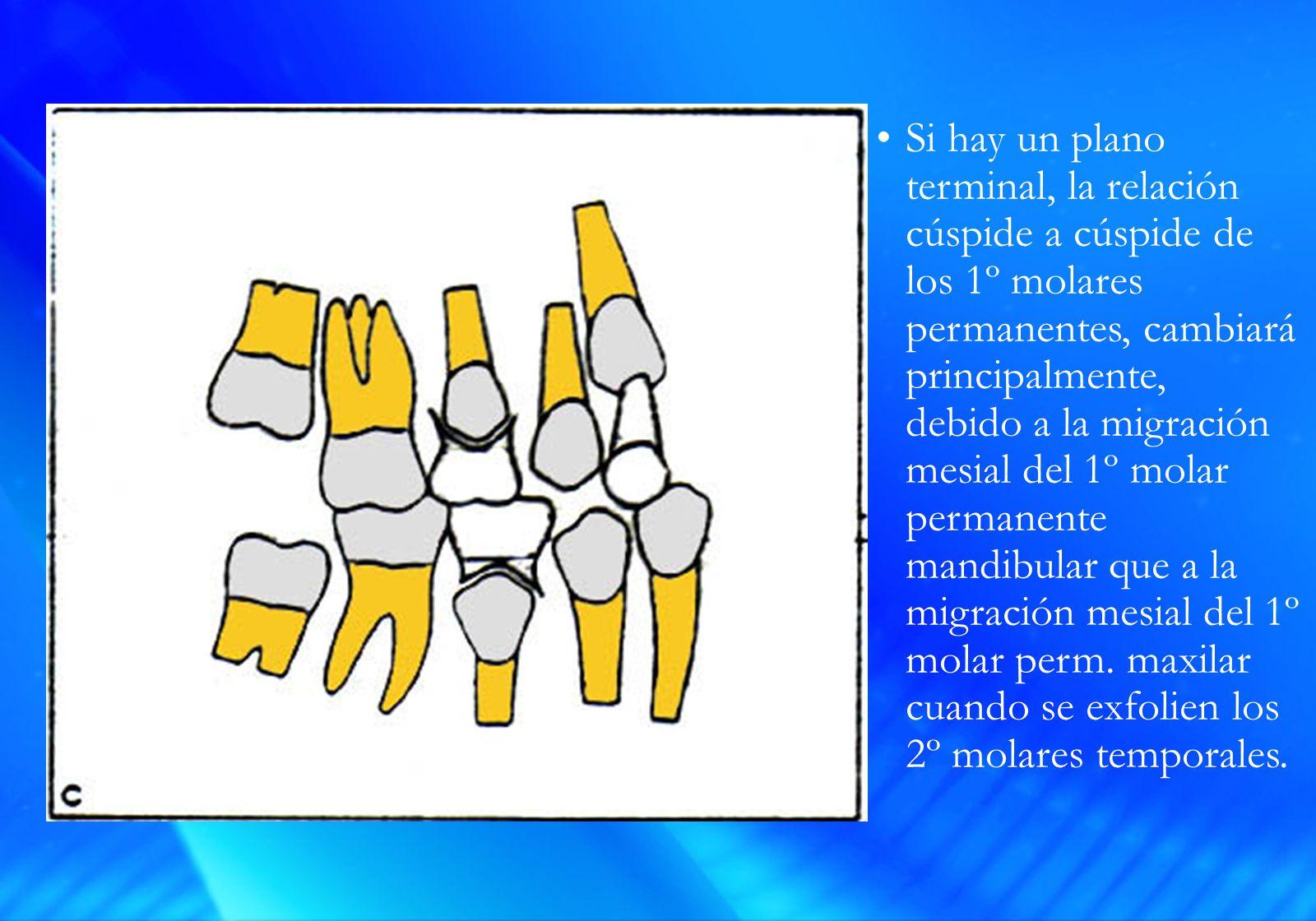 Si hay un plano terminal, la relación cúspide a cúspide de los 1º molares permanentes, cambiará principalmente, debido a la migración mesial del 1º molar permanente mandibular que a la migración mesial del 1º molar perm.