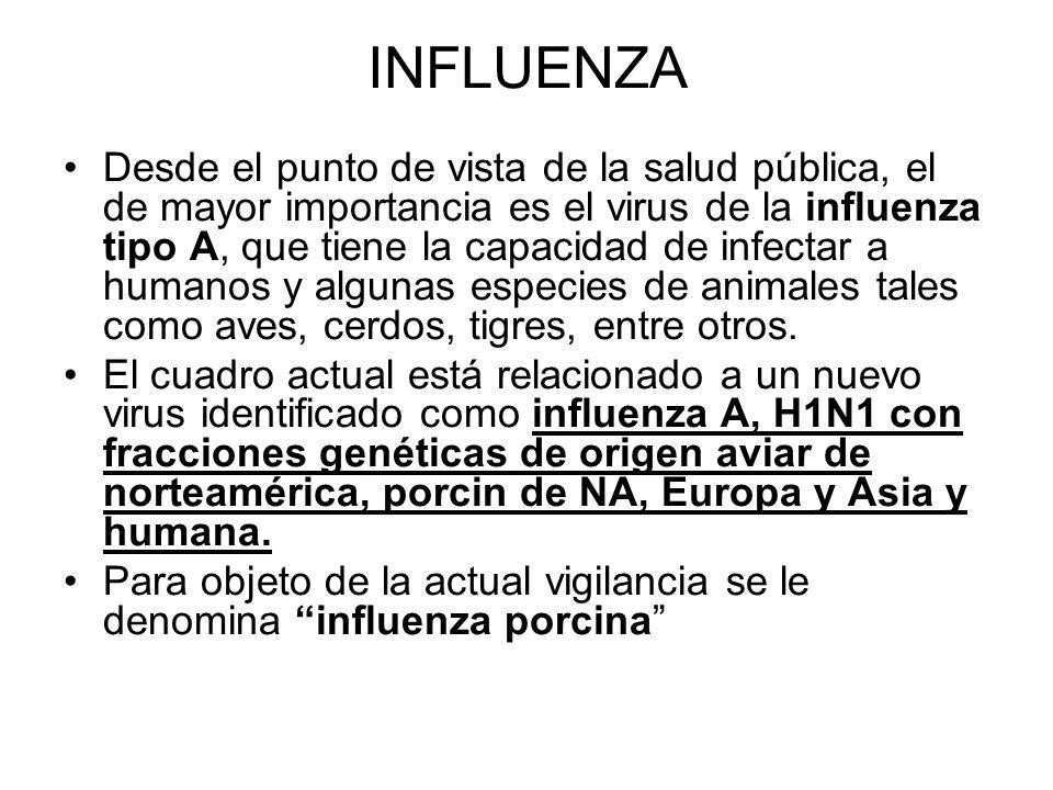INFLUENZA Desde el punto de vista de la salud pública, el de mayor importancia es el virus de la influenza tipo A, que tiene la capacidad de infectar a humanos y algunas especies de animales tales como aves, cerdos, tigres, entre otros.