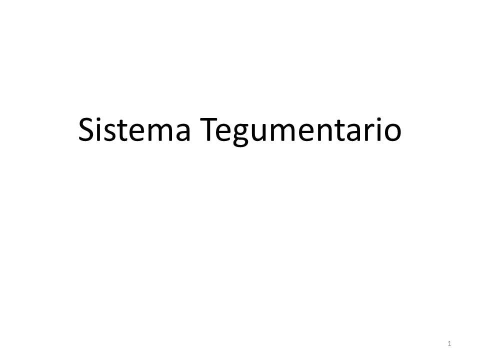 Sistema Tegumentario 1