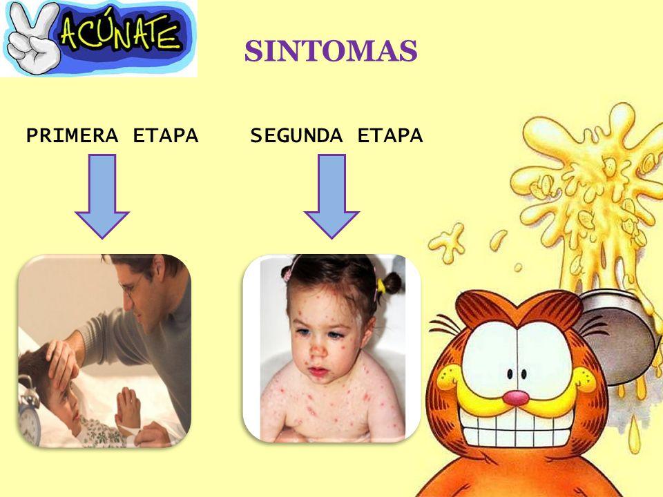 SINTOMAS PRIMERA ETAPASEGUNDA ETAPA