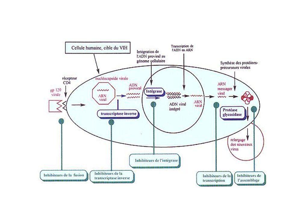 Enfermedad por el virus de Inmunodeficiencia Humana El virus se internaliza en la célula blanco y trascribe su RNA en ADN (enzima transcriptasa reversa) El ADN proviral ingresa al núcleo celular y se integrado al ADN de la célula huésped (por acción de la enzima integrasa).
