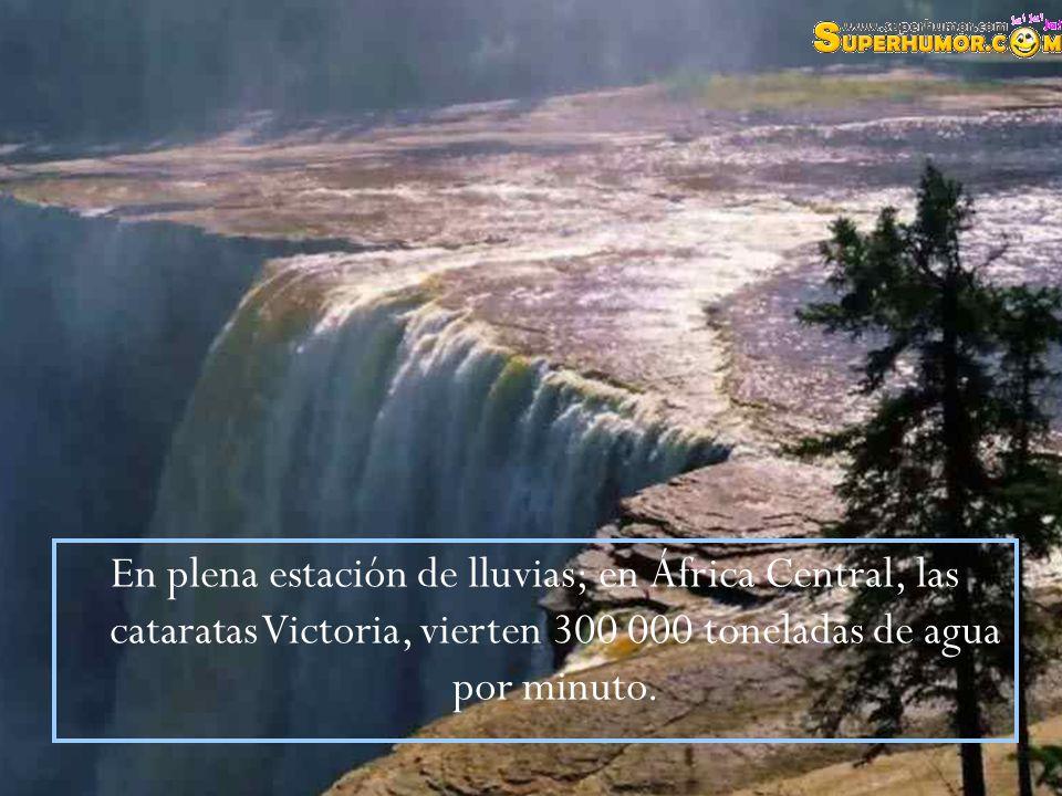 En plena estación de lluvias; en África Central, las cataratas Victoria, vierten 300 000 toneladas de agua por minuto.