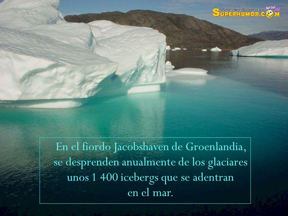 En el fiordo Jacobshaven de Groenlandia, se desprenden anualmente de los glaciares unos 1 400 icebergs que se adentran en el mar.