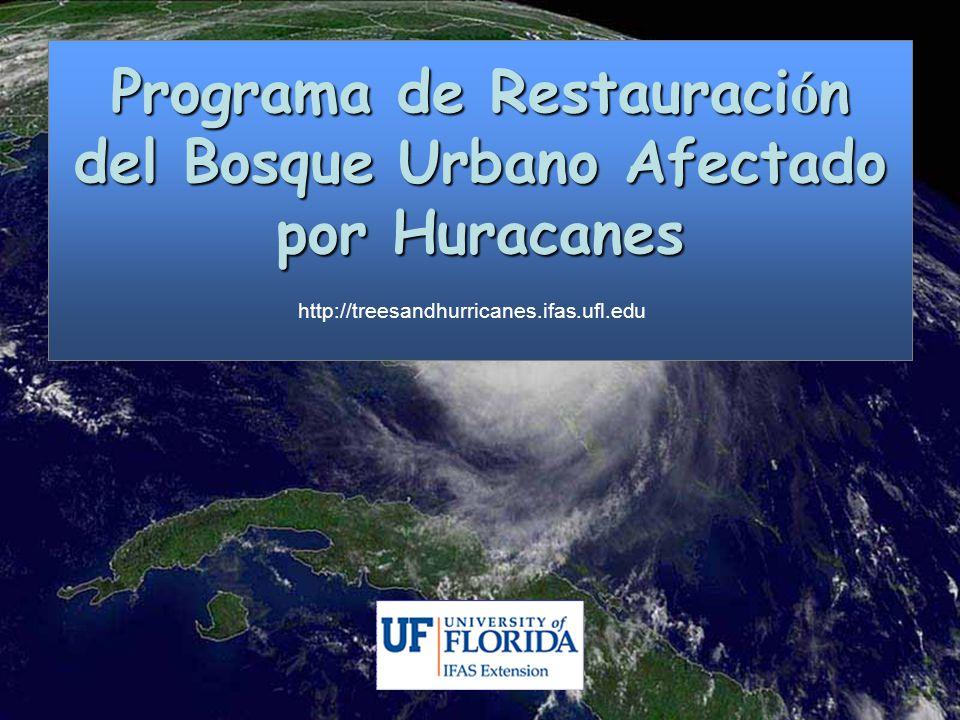 Programa de Restauraci ó n del Bosque Urbano Afectado por Huracanes http://treesandhurricanes.ifas.ufl.edu