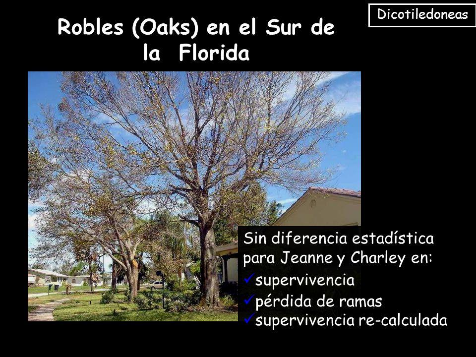 Sin diferencia estadística para Jeanne y Charley en: supervivencia pérdida de ramas supervivencia re-calculada Robles (Oaks) en el Sur de la Florida Dicotiledoneas