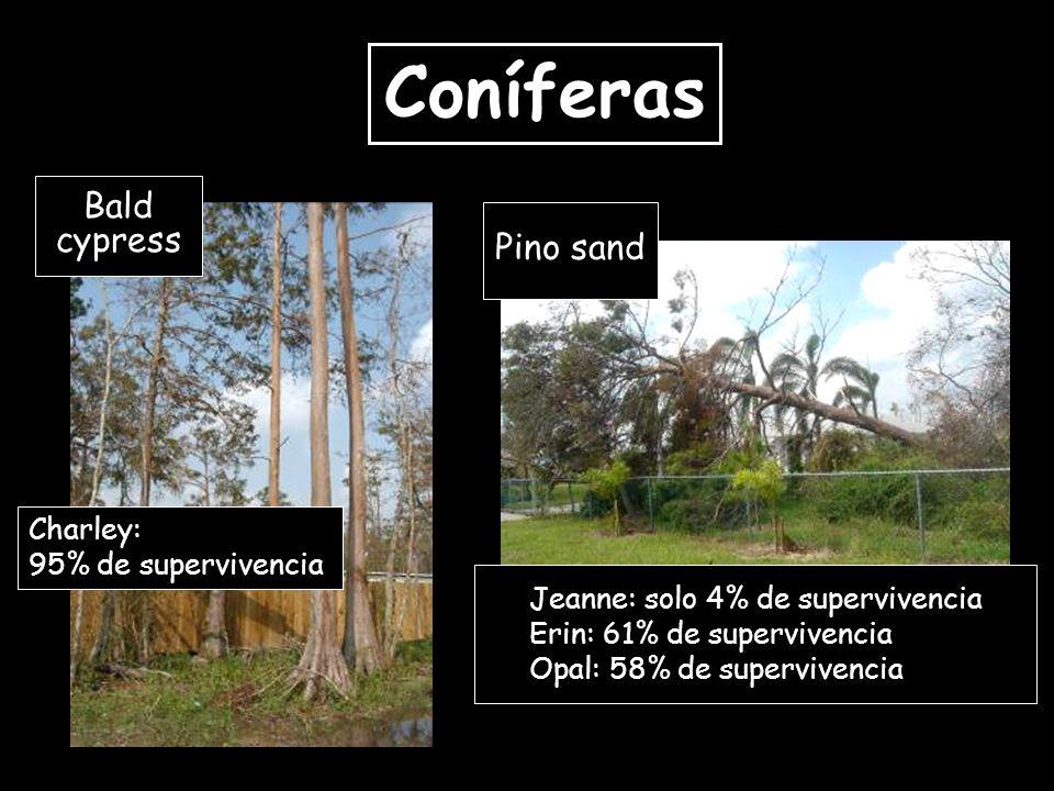 Charley: 95% de supervivencia Bald cypress Pino sand Jeanne: solo 4% de supervivencia Erin: 61% de supervivencia Opal: 58% de supervivencia Coníferas