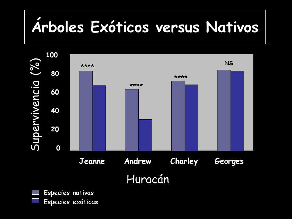 **** NS 0 20 40 60 80 100 JeanneAndrewCharleyGeorges **** Especies nativas Especies exóticas Huracán Supervivencia (%) **** NS Árboles Exóticos versus Nativos