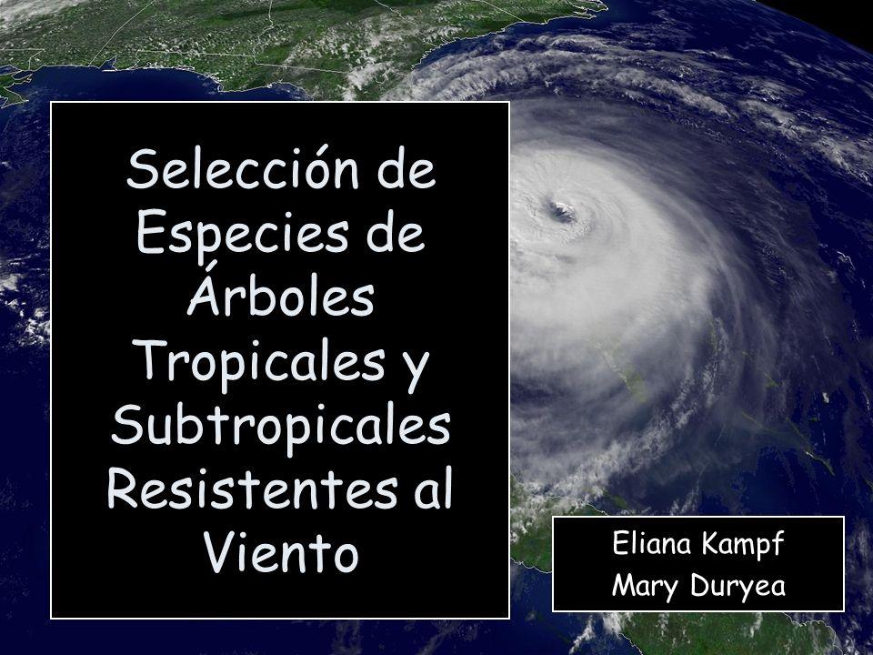 Eliana Kampf Mary Duryea Selección de Especies de Árboles Tropicales y Subtropicales Resistentes al Viento