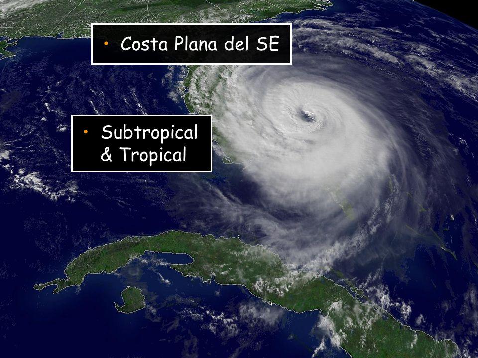 Costa Plana del SE Subtropical & Tropical