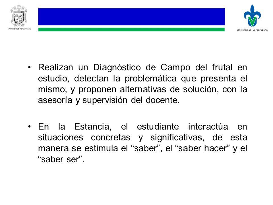 Realizan un Diagnóstico de Campo del frutal en estudio, detectan la problemática que presenta el mismo, y proponen alternativas de solución, con la asesoría y supervisión del docente.
