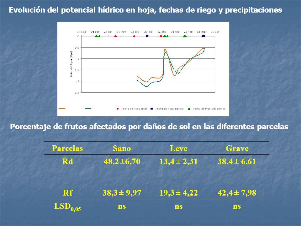 Rf Rd Evolución del potencial hídrico en hoja, fechas de riego y precipitaciones ParcelasSanoLeveGrave Rd48,2 ±6,7013,4 ± 2,3138,4 ± 6,61 Rf38,3 ± 9,9719,3 ± 4,2242,4 ± 7,98 LSD 0,05 ns Porcentaje de frutos afectados por daños de sol en las diferentes parcelas