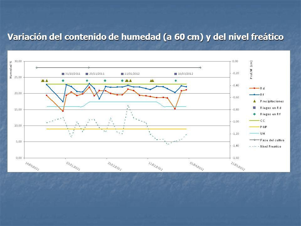 Variación del contenido de humedad (a 60 cm) y del nivel freático