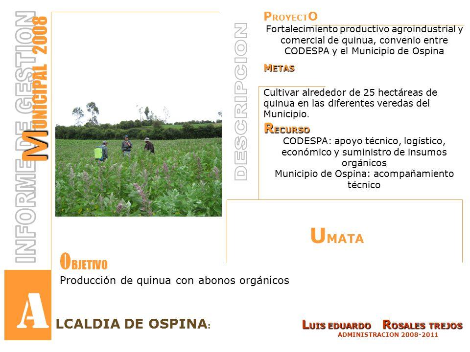P ROYECT O Fortalecimiento productivo agroindustrial y comercial de quinua, convenio entre CODESPA y el Municipio de Ospina M ETAS Cultivar alrededor de 25 hectáreas de quinua en las diferentes veredas del Municipio.