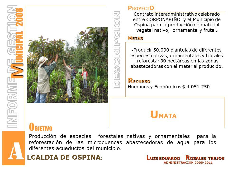 P ROYECT O Contrato interadministrativo celebrado entre CORPONARIÑO y el Municipio de Ospina para la producción de material vegetal nativo, ornamental y frutal.