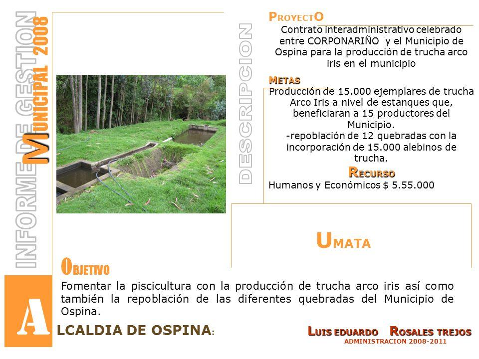 P ROYECT O Contrato interadministrativo celebrado entre CORPONARIÑO y el Municipio de Ospina para la producción de trucha arco iris en el municipio M ETAS Producción de 15.000 ejemplares de trucha Arco Iris a nivel de estanques que, beneficiaran a 15 productores del Municipio.