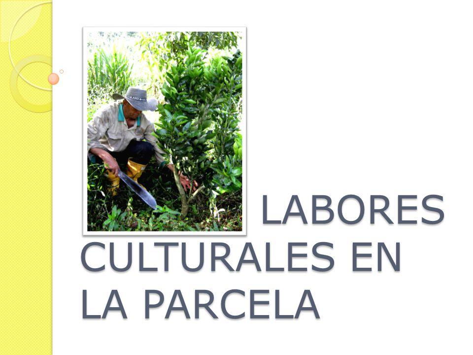 LABORES CULTURALES EN LA PARCELA LABORES CULTURALES EN LA PARCELA