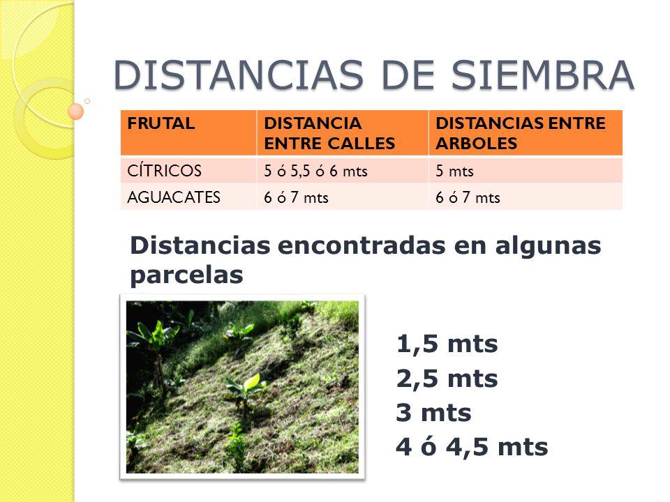 DISTANCIAS DE SIEMBRA FRUTALDISTANCIA ENTRE CALLES DISTANCIAS ENTRE ARBOLES CÍTRICOS5 ó 5,5 ó 6 mts5 mts AGUACATES6 ó 7 mts Distancias encontradas en algunas parcelas 1,5 mts 2,5 mts 3 mts 4 ó 4,5 mts