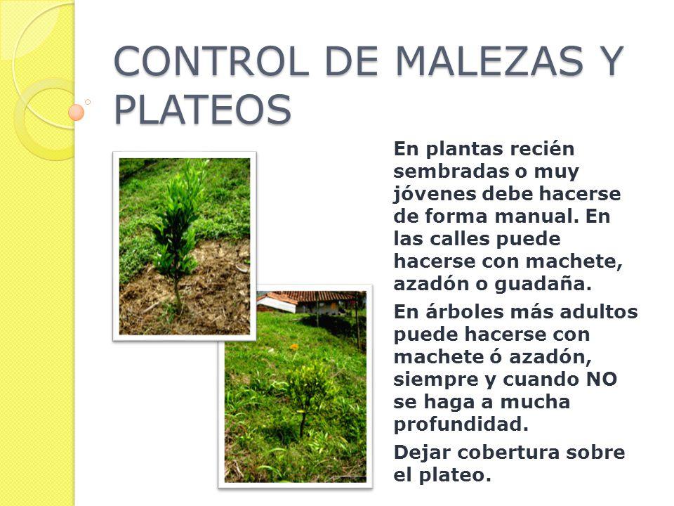 CONTROL DE MALEZAS Y PLATEOS En plantas recién sembradas o muy jóvenes debe hacerse de forma manual.