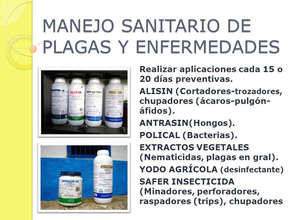 MANEJO SANITARIO DE PLAGAS Y ENFERMEDADES Realizar aplicaciones cada 15 o 20 días preventivas.