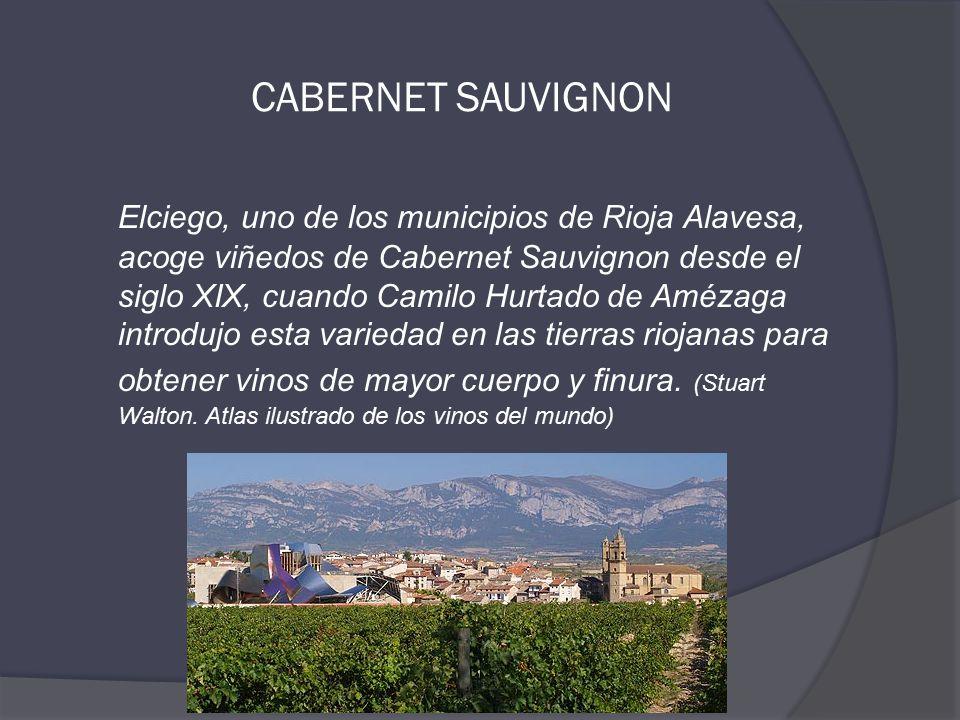 CABERNET SAUVIGNON Elciego, uno de los municipios de Rioja Alavesa, acoge viñedos de Cabernet Sauvignon desde el siglo XIX, cuando Camilo Hurtado de Amézaga introdujo esta variedad en las tierras riojanas para obtener vinos de mayor cuerpo y finura.