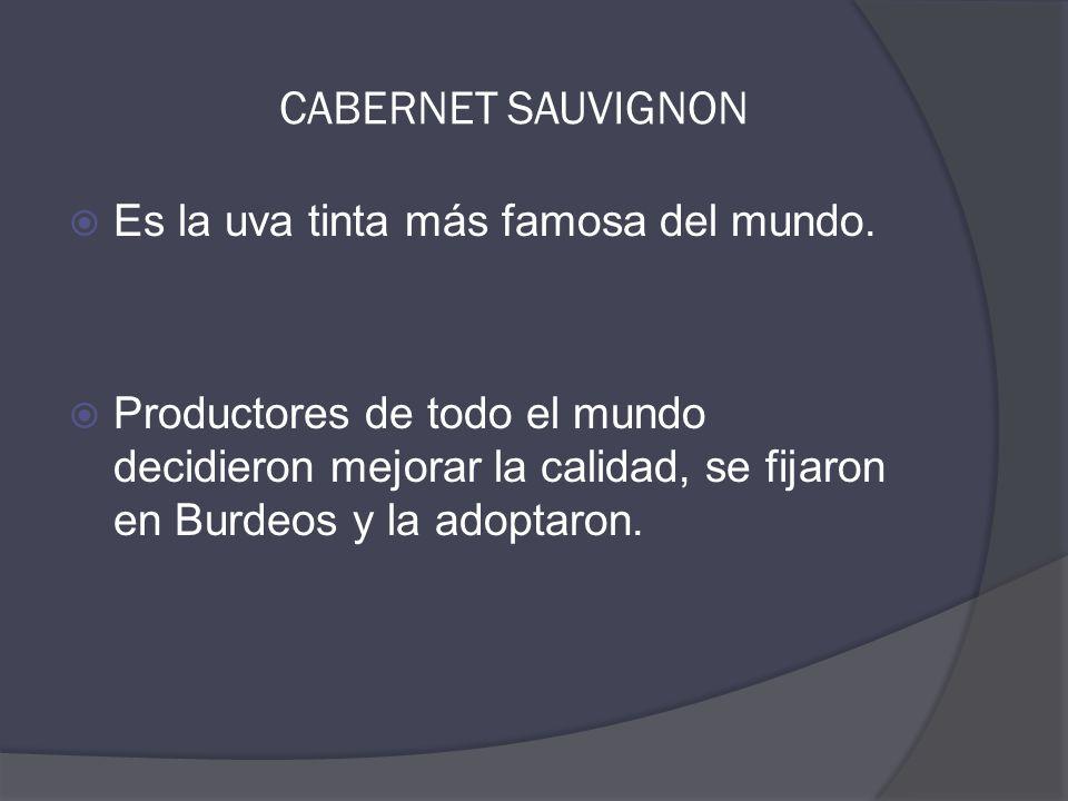 CABERNET SAUVIGNON  Es la uva tinta más famosa del mundo.