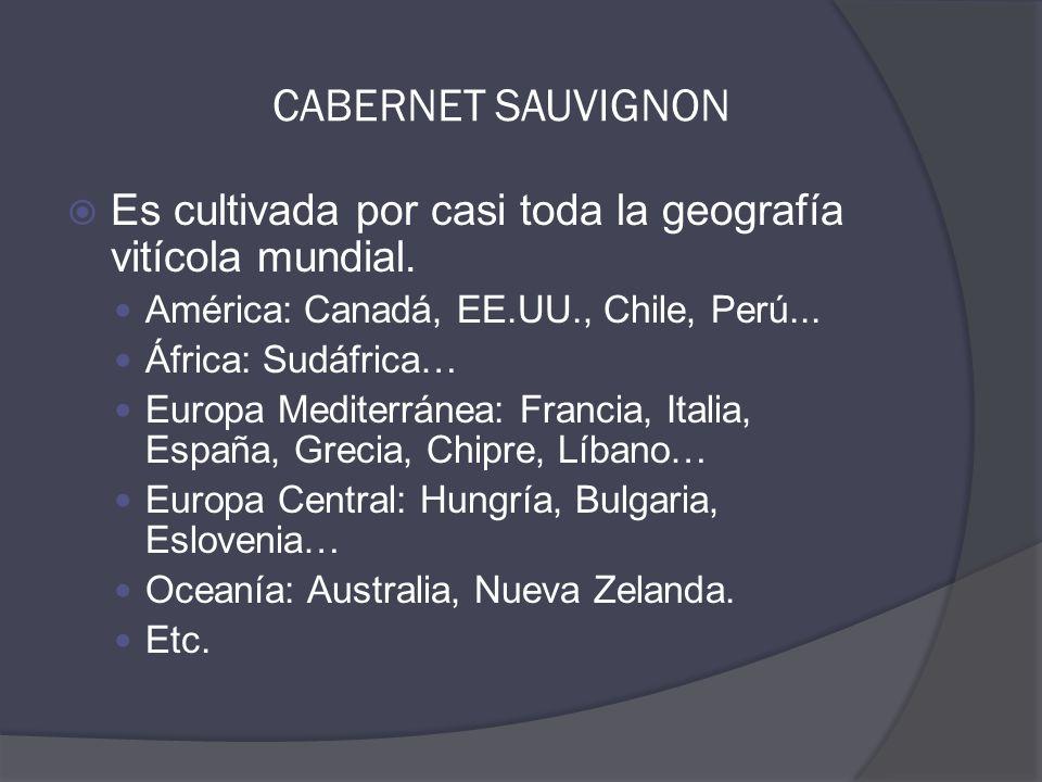 CABERNET SAUVIGNON  Es cultivada por casi toda la geografía vitícola mundial.
