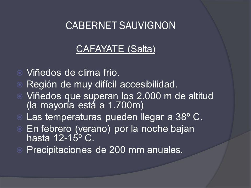 CAFAYATE (Salta)  Viñedos de clima frío.  Región de muy difícil accesibilidad.