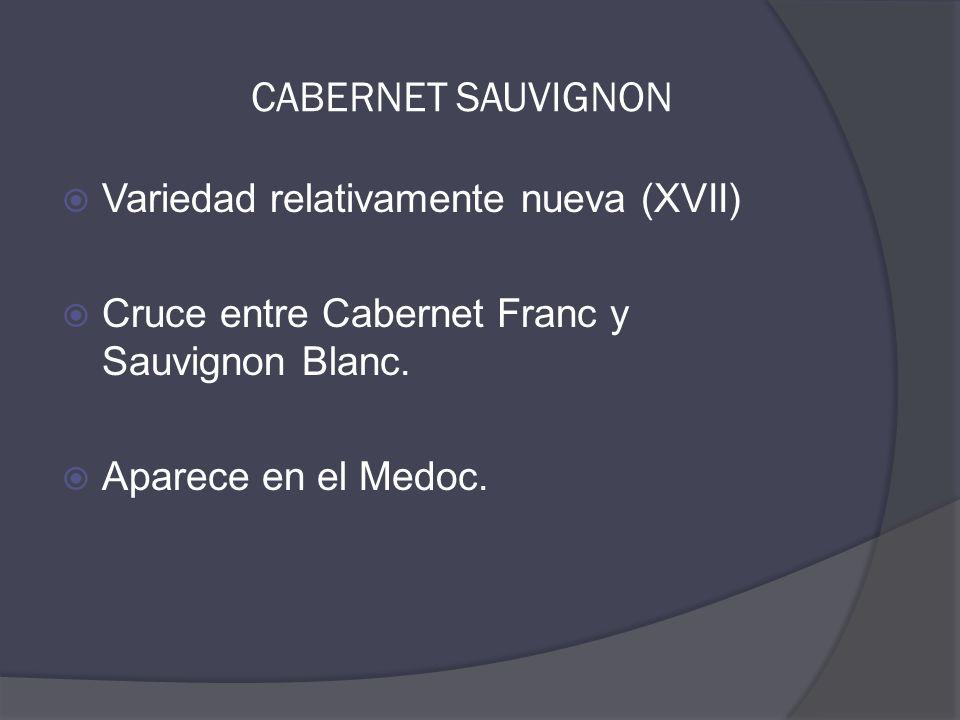 CABERNET SAUVIGNON  Variedad relativamente nueva (XVII)  Cruce entre Cabernet Franc y Sauvignon Blanc.