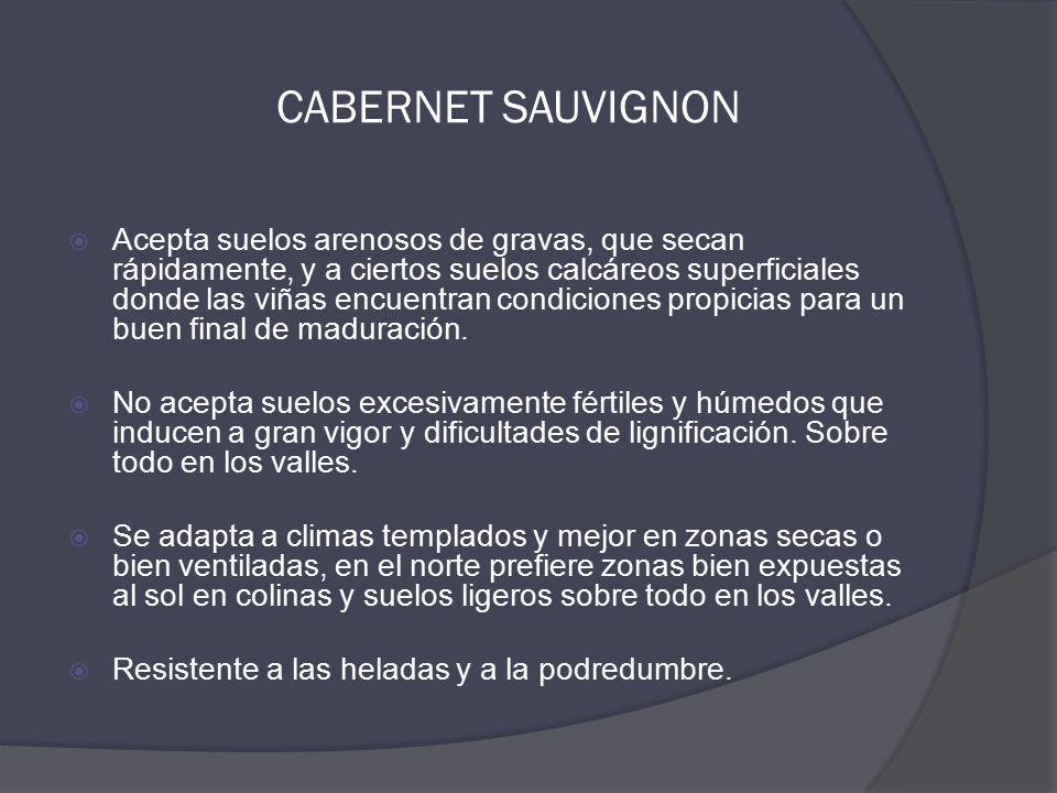 CABERNET SAUVIGNON  Acepta suelos arenosos de gravas, que secan rápidamente, y a ciertos suelos calcáreos superficiales donde las viñas encuentran condiciones propicias para un buen final de maduración.