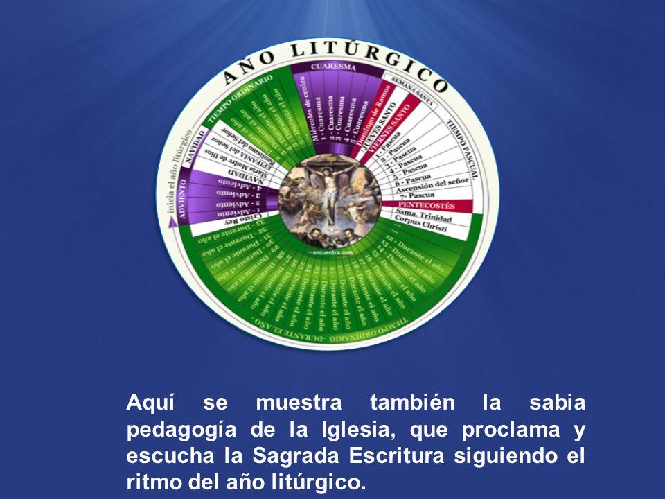 Aquí se muestra también la sabia pedagogía de la Iglesia, que proclama y escucha la Sagrada Escritura siguiendo el ritmo del año litúrgico.