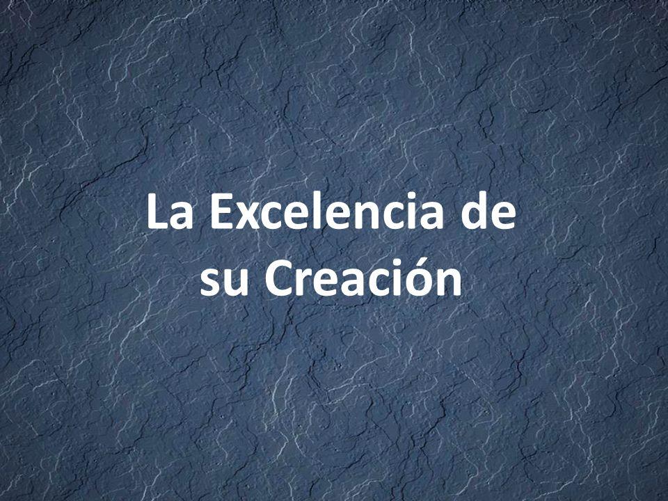 La Excelencia de su Creación