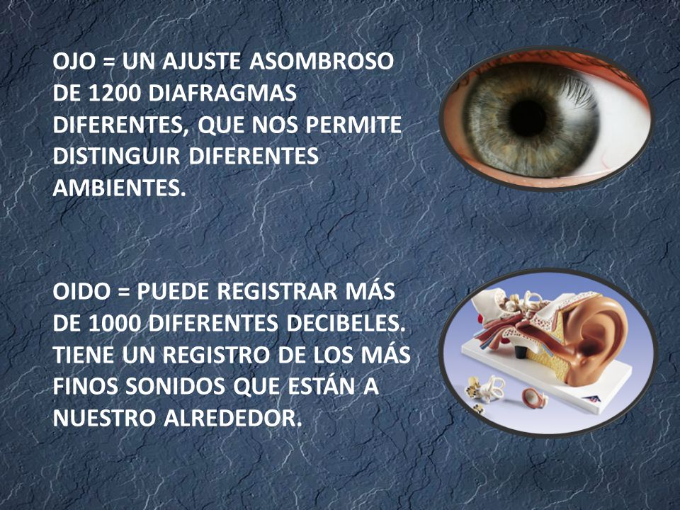 OJO = UN AJUSTE ASOMBROSO DE 1200 DIAFRAGMAS DIFERENTES, QUE NOS PERMITE DISTINGUIR DIFERENTES AMBIENTES.
