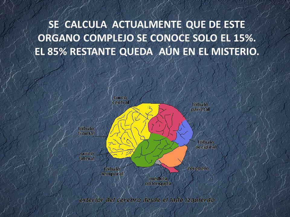 SE CALCULA ACTUALMENTE QUE DE ESTE ORGANO COMPLEJO SE CONOCE SOLO EL 15%.