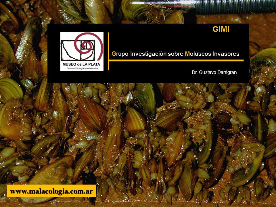 www.malacologia.com.ar GIMI Grupo Investigación sobre Moluscos Invasores Dr. Gustavo Darrigran