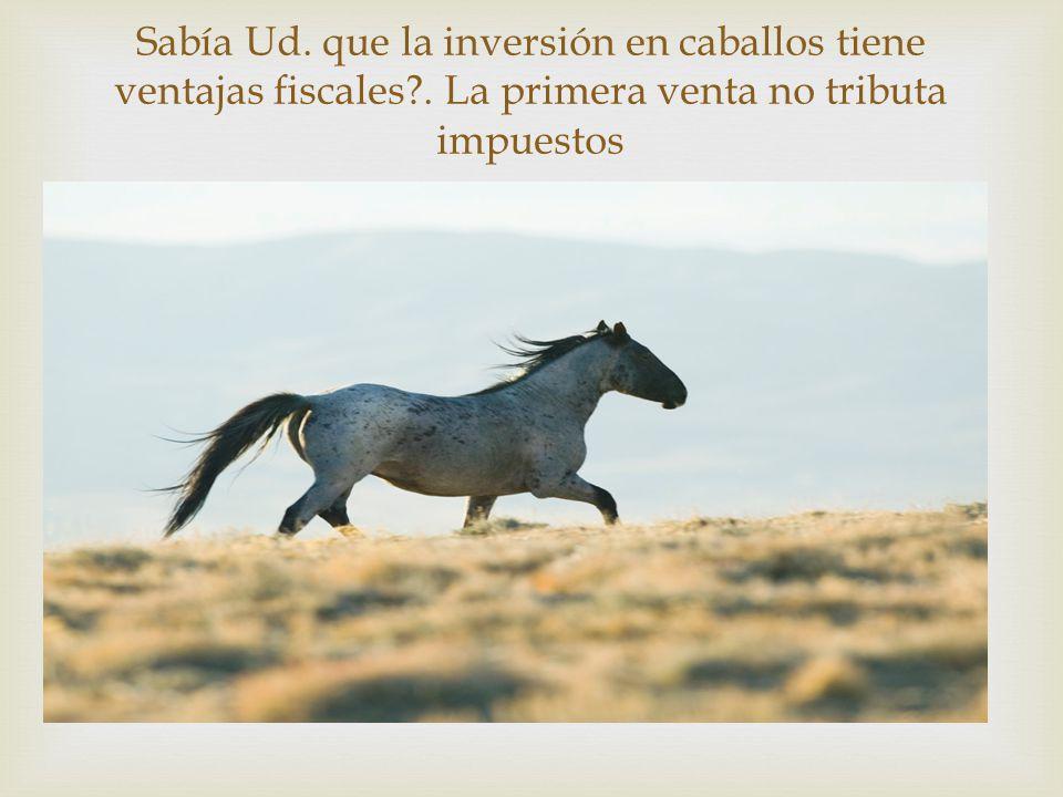  Sabía Ud. que la inversión en caballos tiene ventajas fiscales .