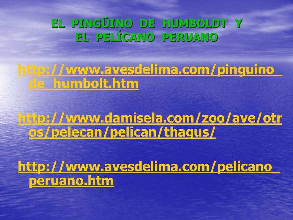 EL PINGÜINO DE HUMBOLDT Y EL PELÍCANO PERUANO http://www.avesdelima.com/pinguino_ de_humbolt.htm http://www.damisela.com/zoo/ave/otr os/pelecan/pelican/thagus/ http://www.avesdelima.com/pelicano_ peruano.htm