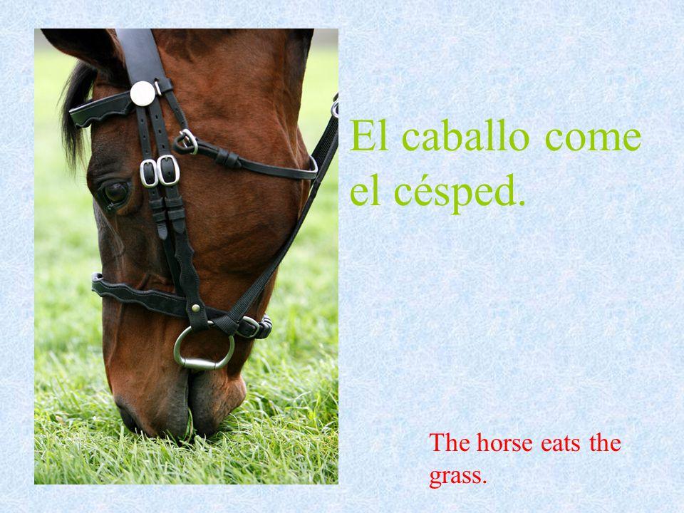 El caballo come el césped. The horse eats the grass.