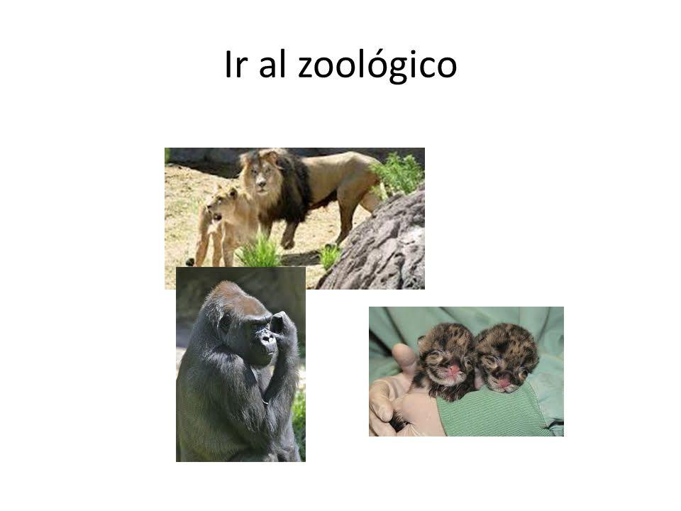 Ir al zoológico