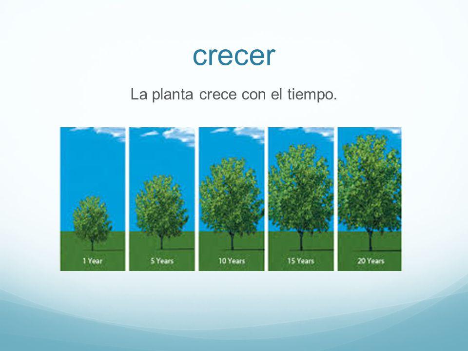 crecer La planta crece con el tiempo.