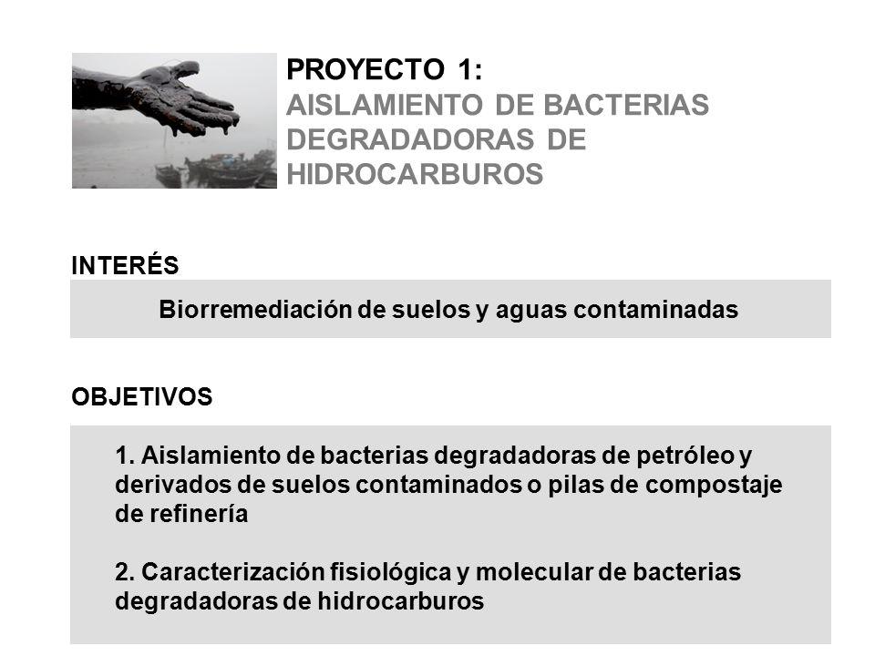 PROYECTO 1: AISLAMIENTO DE BACTERIAS DEGRADADORAS DE HIDROCARBUROS INTERÉS Biorremediación de suelos y aguas contaminadas OBJETIVOS 1.