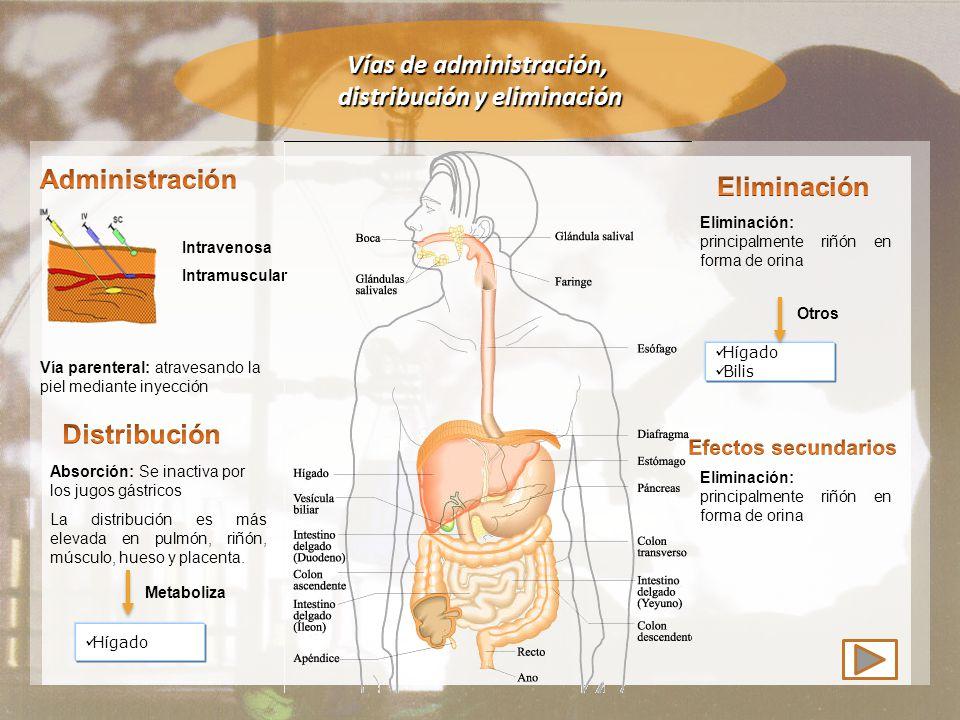 Vías de administración, distribución y eliminación Vía parenteral: atravesando la piel mediante inyección Absorción: Se inactiva por los jugos gástricos La distribución es más elevada en pulmón, riñón, músculo, hueso y placenta.
